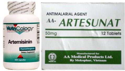Thuốc artemisinin là gì? Công dụng và liều dùng của thuốc ra sao? 2