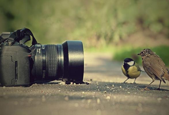 Sinh viên trường báo lấn sân ngành nghề nhiếp ảnh