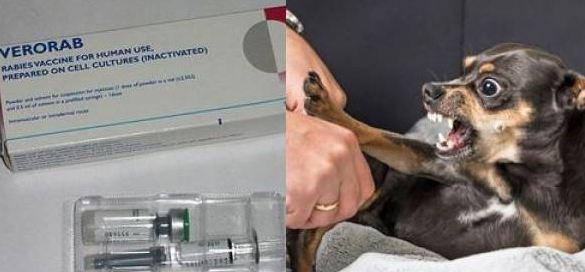 Bộ Y tế lên tiếng về việc thiếu vắc xin phòng dại