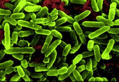 Tiêu chảy E Coli - Tìm hiểu triệu chứng & Nguyên nhân gây bệnh 1