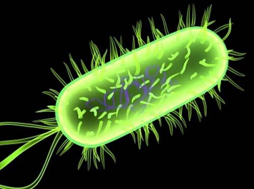 Tiêu chảy E Coli - Tìm hiểu triệu chứng & Nguyên nhân gây bệnh 2