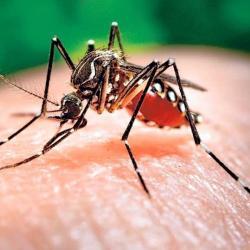 Cách nhận biết sốt xuất huyết biến chứng và điều trị